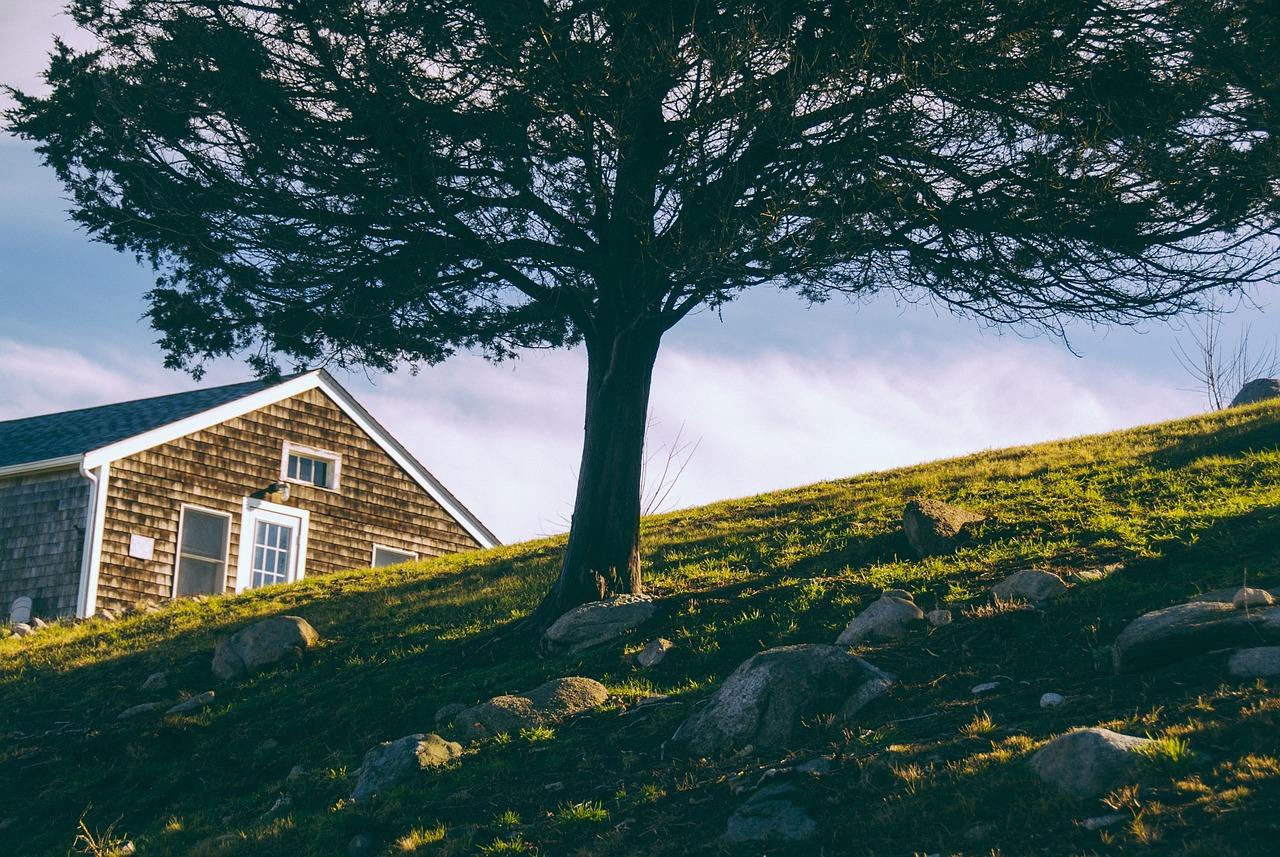 Wycięcie drzewa z własnej działki bez zezwolenia? Jeden warunek.